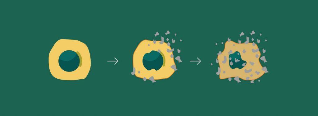 Apsaugokite savo ląsteles